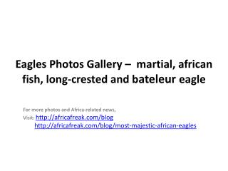 Photos of Eagles to download for free (martial, african fish