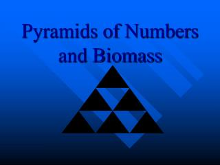Pyramids of Numbers and Biomass