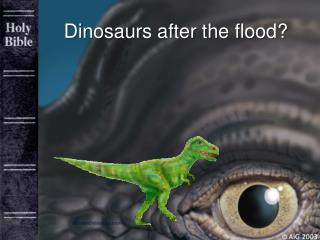 Dinosaurs after the flood?