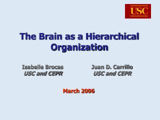 The Brain as a Hierarchical Organization