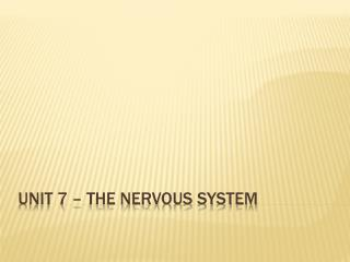 Unit 7 – The Nervous System
