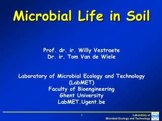 Microbial Life in Soil