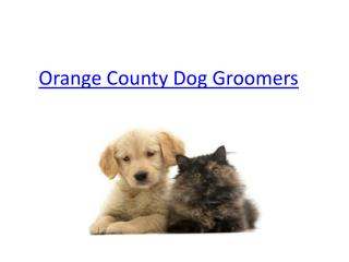 Orange County Dog Groomers