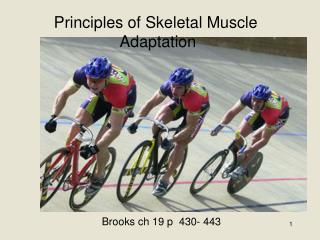 Principles of Skeletal Muscle  Adaptation
