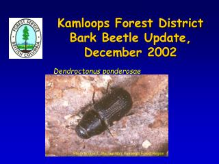 Kamloops Forest District  Bark Beetle Update,  December 2002