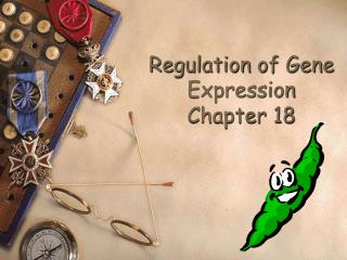 Regulation of Gene Expression Chapter 18