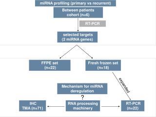 RNA processing machinery