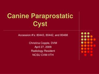 Canine Paraprostatic Cyst