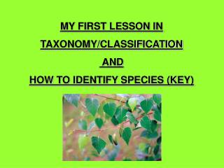 MY FIRST LESSON IN TAXONOMY/CLASSIFICATION  AND HOW TO IDENTIFY SPECIES (KEY)