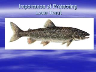Importance of Protecting Lake Trout