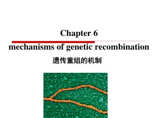 Chapter 6  mechanisms of genetic recombination