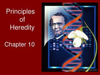 Principles of Heredity