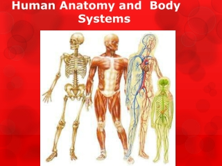 Three body systems that function to respond to the environment and maintain homeostasis