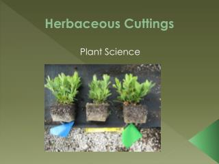 Herbaceous Cuttings