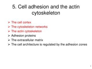 5. Cell adhesion and the actin cytoskeleton