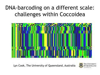 DNA-barcoding on a different scale: challenges within Coccoidea