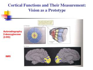 Cortical Functions and Their Measurement: Vision as a Prototype