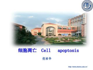细胞凋亡   Cell   apoptosis