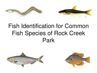 Fish Identification for Common Fish Species of Rock Creek Park