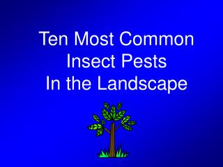 Ten Most Common Insect Pests In the Landscape