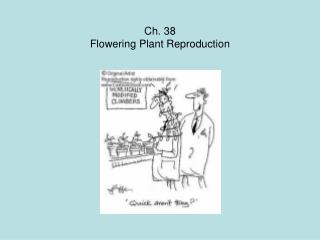 Ch. 38 Flowering Plant Reproduction