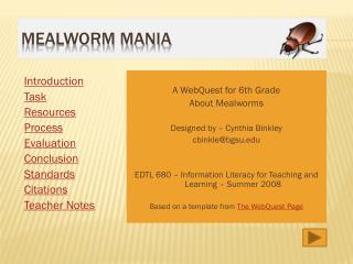 Mealworm Mania