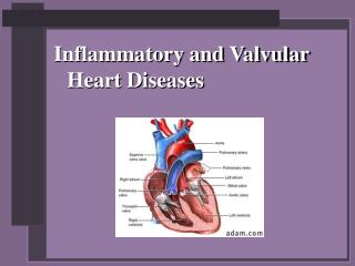 Inflammatory and Valvular Heart Diseases