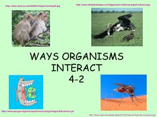 WAYS ORGANISMS INTERACT 4-2