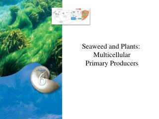 Seaweed and Plants:  Multicellular  Primary Producers