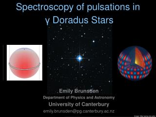 Spectroscopy of pulsations in γ  Doradus Stars
