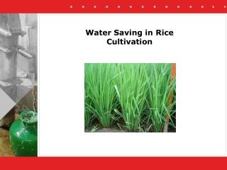 Water Saving in Rice Cultivation