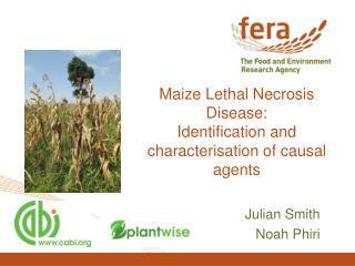 Maize Lethal Necrosis Disease: Identification and characterisation of causal agents