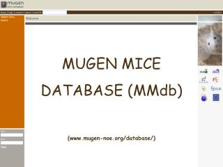 MUGEN MICE DATABASE (MMdb) (mugen-noe/database/)