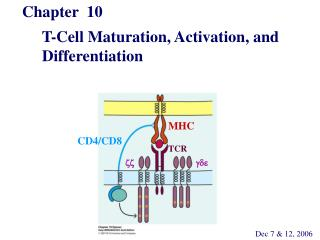 Chapter  10        T-Cell Maturation, Activation, and       Differentiation