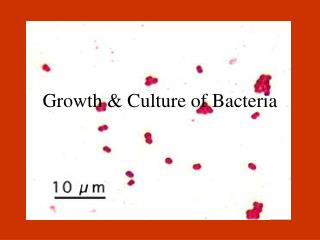 Growth & Culture of Bacteria