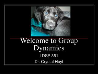 Welcome to Group Dynamics
