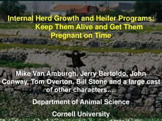 Internal Herd Growth and Heifer Programs:  	Keep Them Alive and Get Them  Pregnant on Time