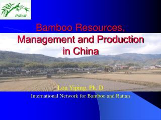 Bamboo Resources, Management and Production in China