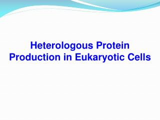 Heterologous Protein Production in Eukaryotic Cells