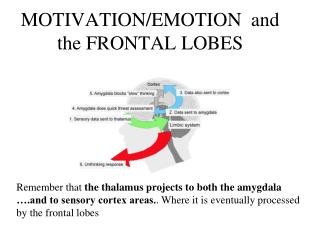 MOTIVATION/EMOTION  and the FRONTAL LOBES