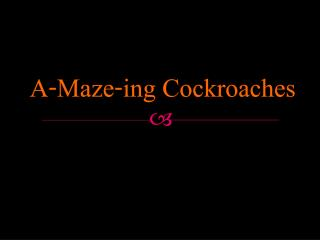 A-Maze-ing Cockroaches