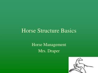 Horse Structure Basics