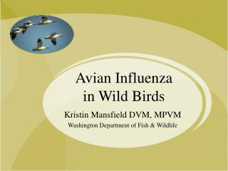 Avian Influenza  in Wild Birds
