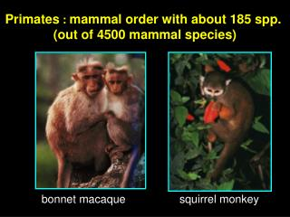 Primates  :  mammal order with about 185 spp.  (out of 4500 mammal species)