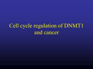 Cell cycle regulation of DNMT1 and cancer