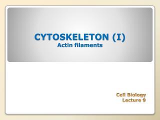 CYTOSKELETON (I) Actin filaments