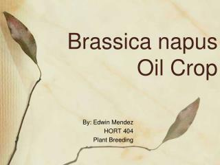 Brassica napus  Oil Crop