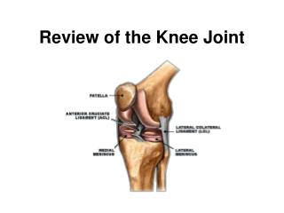 Review of the Knee Joint