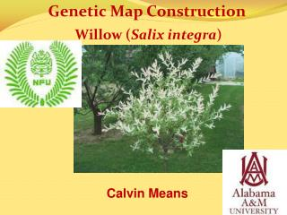 Genetic Map Construction    Willow ( Salix integra )