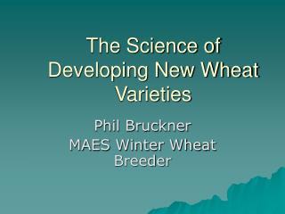 The Science of Developing New Wheat Varieties